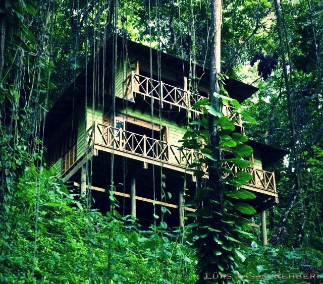 Kanopi House, Jamaika
