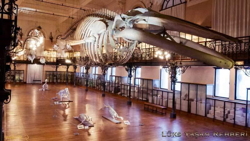 Oceanographic Müzesi - 2