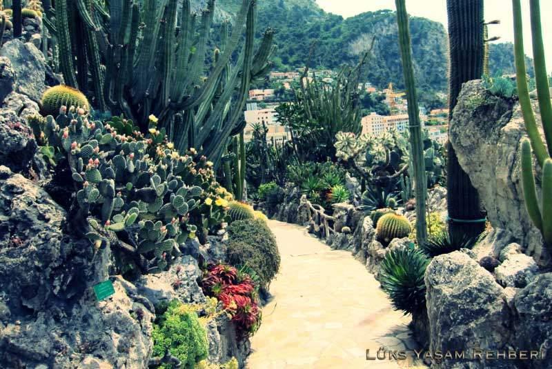 Prenses Grace Botanik Bahçesi - 2
