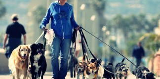 Köpek Bakıcılığı Yaparak Para Kazanmak
